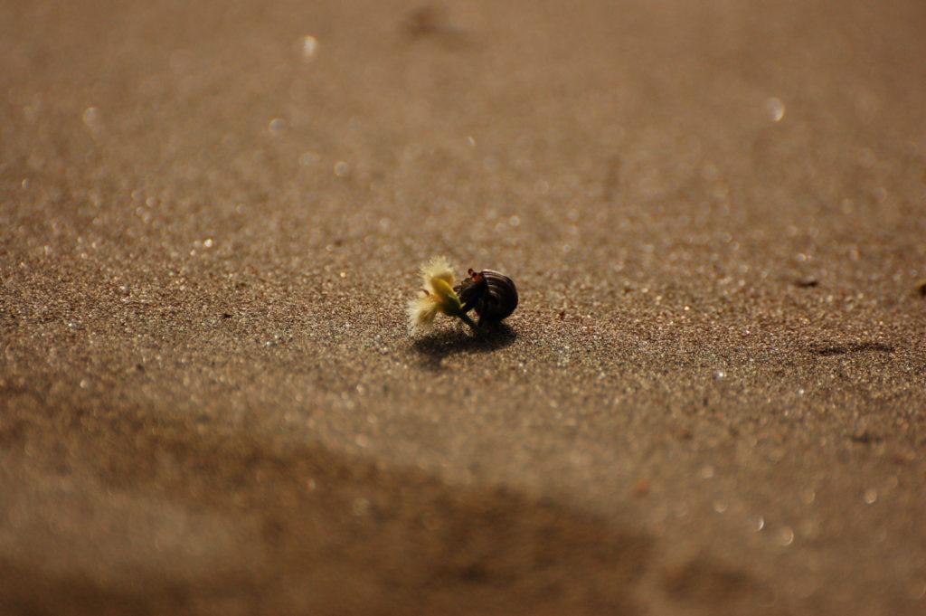 L'entretien préalable image bernard l'ermite