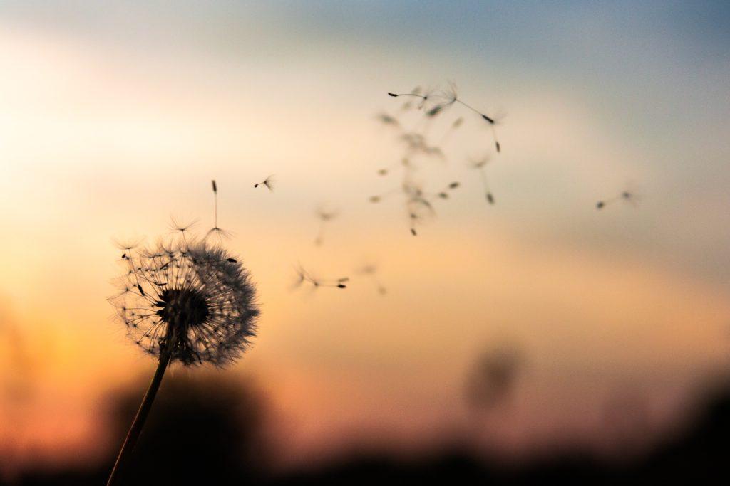 Semer les graines de printemps intérieur / Source : (c) Dawid Zawila - Unsplash